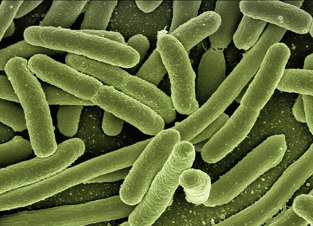 E-Coli is a dangerous bug and it is understandable that you would want to get rid of it. But not all bacterium are harmful.
