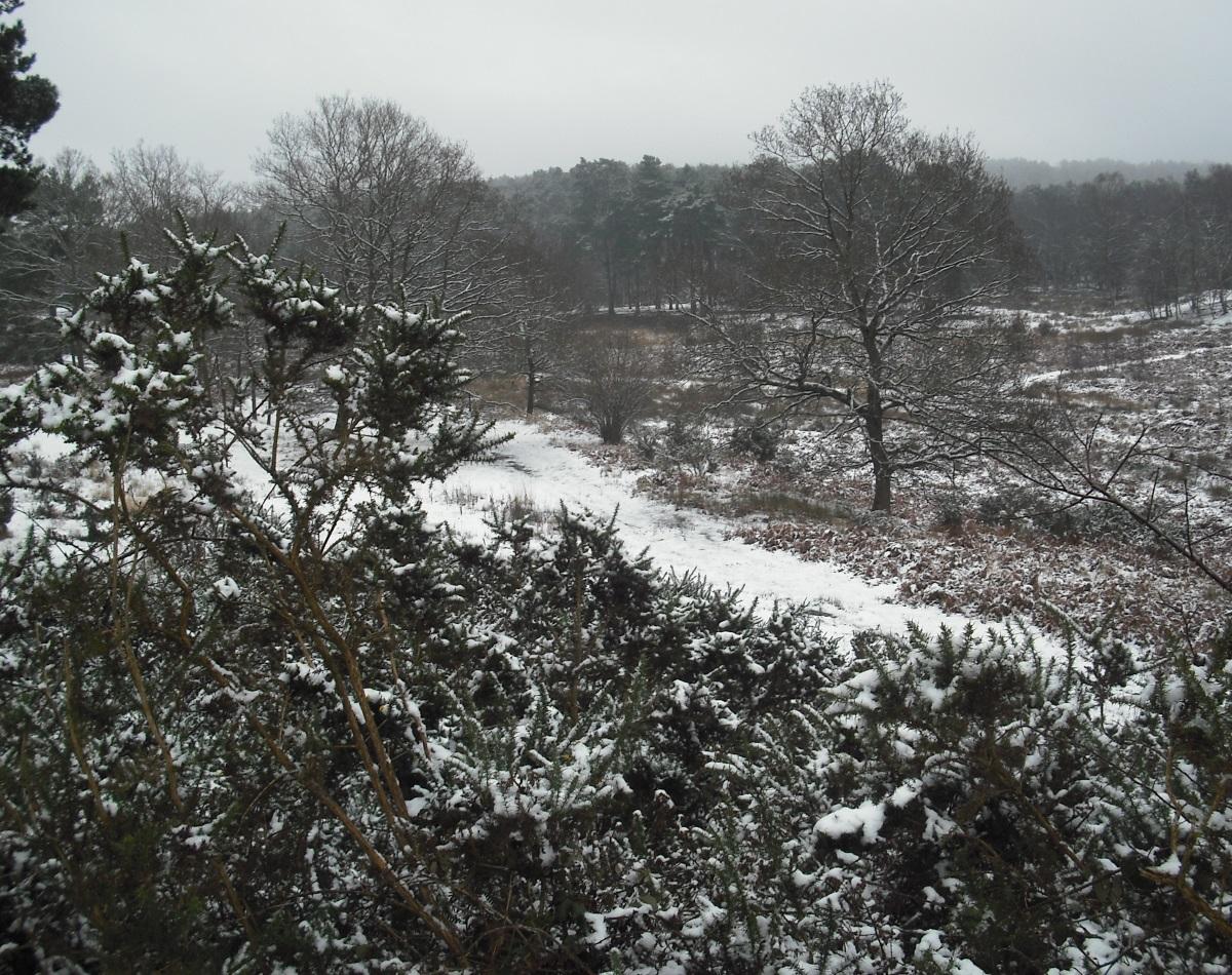 Copyright MG Mason: heathland near Petersfield, approx Jan 2013